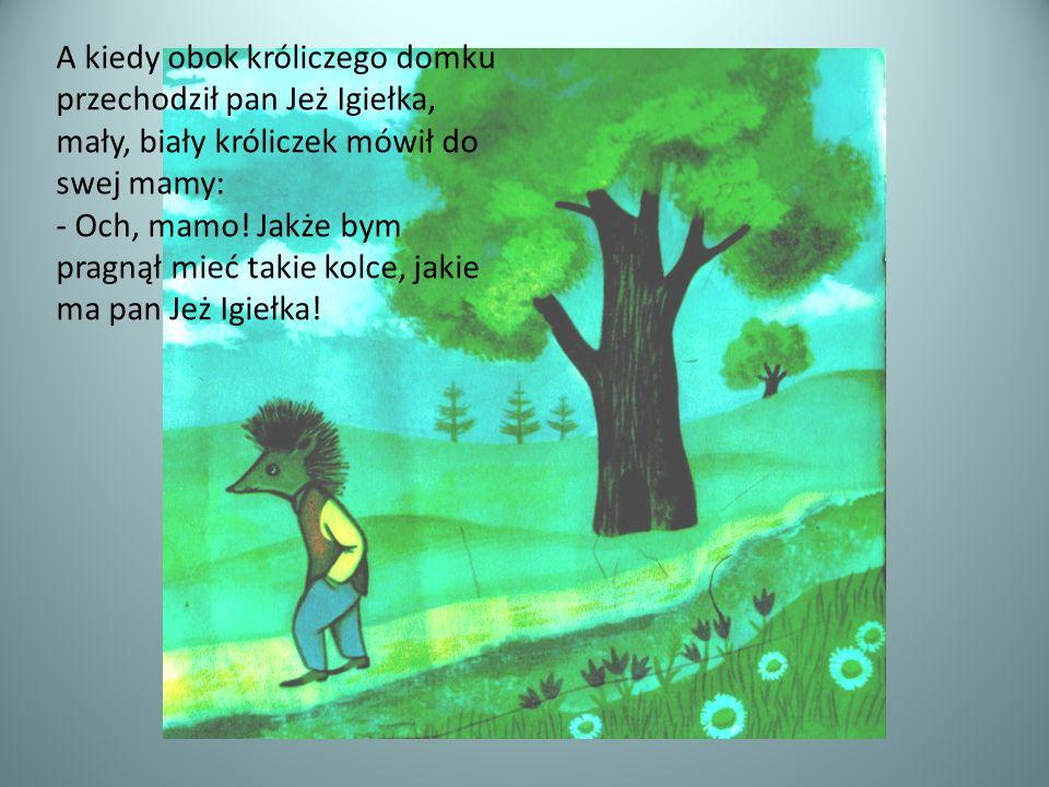 A kiedy obok króliczego domku przechodził pan Jeż Igiełka, mały, biały króliczek mówił do swej mamy: - Och, mamo! Jakże bym pragnął mieć takie kolce,