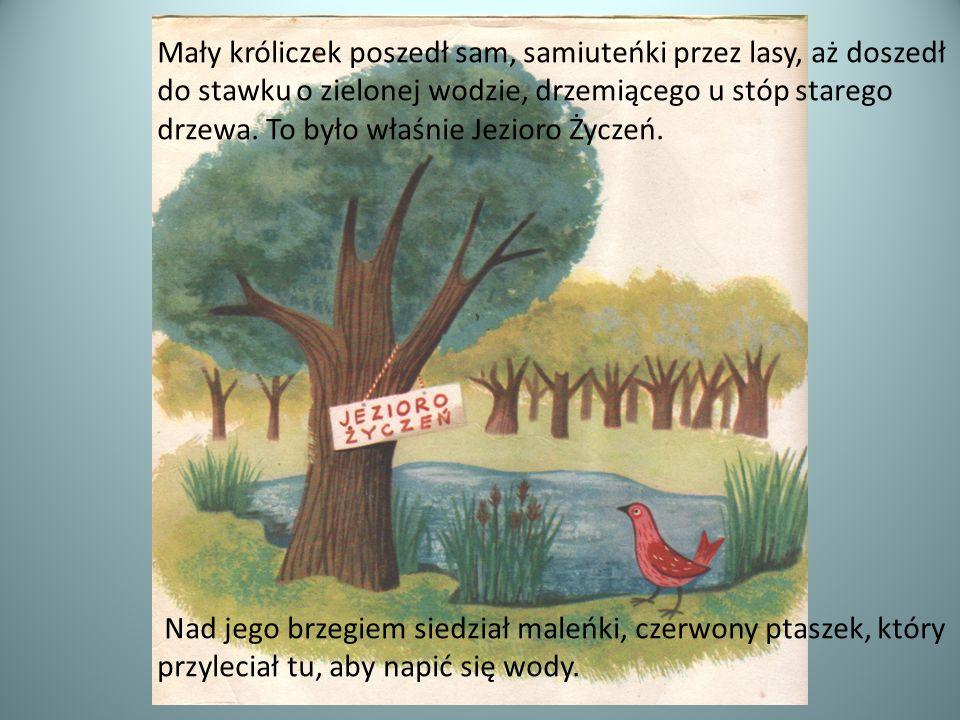 Mały króliczek poszedł sam, samiuteńki przez lasy, aż doszedł do stawku o zielonej wodzie, drzemiącego u stóp starego drzewa. To było właśnie Jezioro