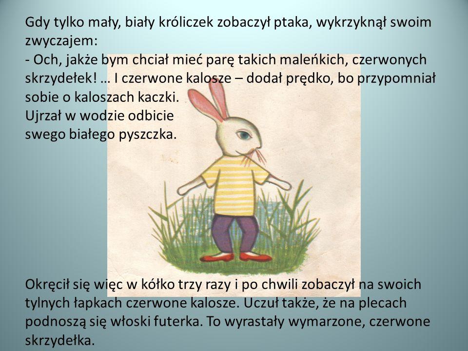 Gdy tylko mały, biały króliczek zobaczył ptaka, wykrzyknął swoim zwyczajem: - Och, jakże bym chciał mieć parę takich maleńkich, czerwonych skrzydełek.