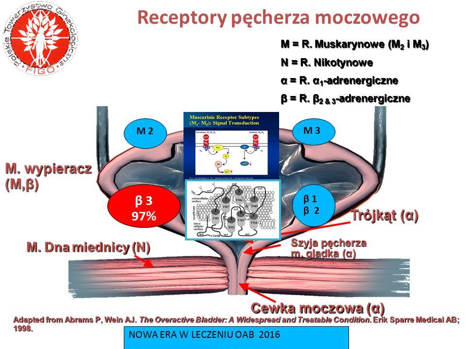 Receptory pęcherza moczowego Μ = R. Muskarynowe (M 2 i M 3 ) Ν = R. Nikotynowe α = R. α 1 -adrenergiczne β = R. β 2 & 3 -adrenergiczne M. wypieracz (M