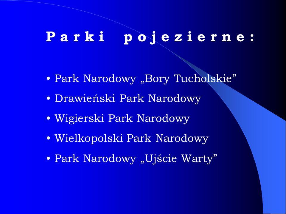 """P a r k i p o j e z i e r n e : Park Narodowy """"Bory Tucholskie Drawieński Park Narodowy Wigierski Park Narodowy Wielkopolski Park Narodowy Park Narodowy """"Ujście Warty"""