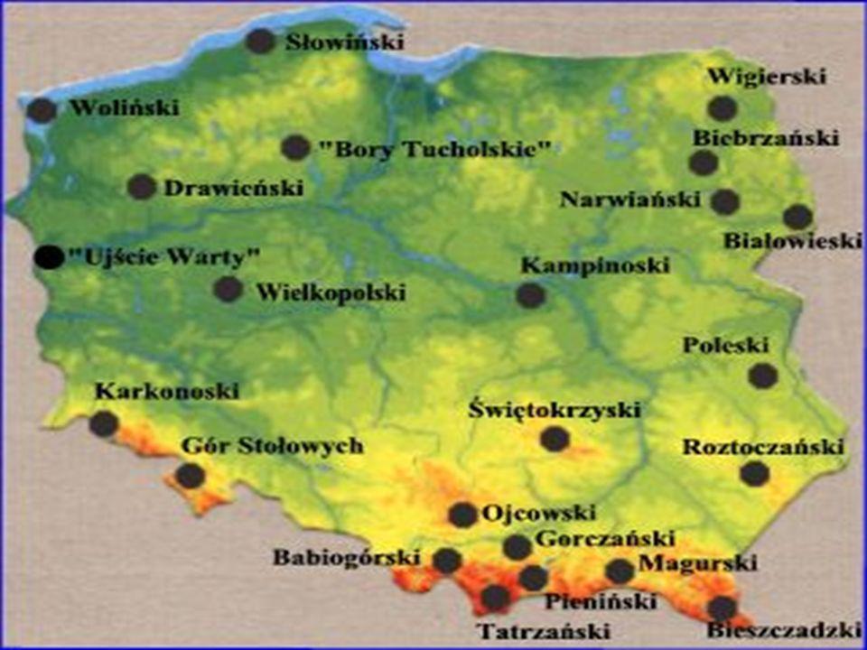 Park reprezentuje obszar Borów Tucholskich na Pojezierzu Pomorskim.