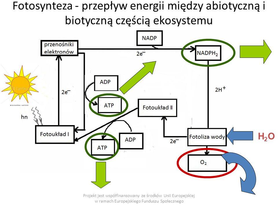 H2OH2O Fotosynteza - przepływ energii między abiotyczną i biotyczną częścią ekosystemu