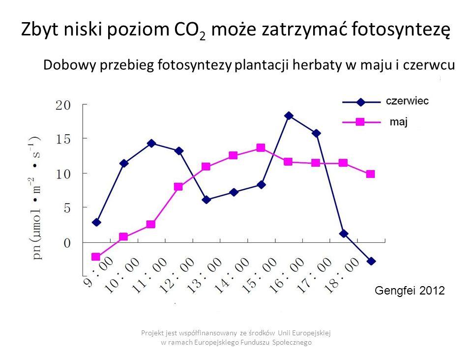 Gengfei 2012 Zbyt niski poziom CO 2 może zatrzymać fotosyntezę Dobowy przebieg fotosyntezy plantacji herbaty w maju i czerwcu