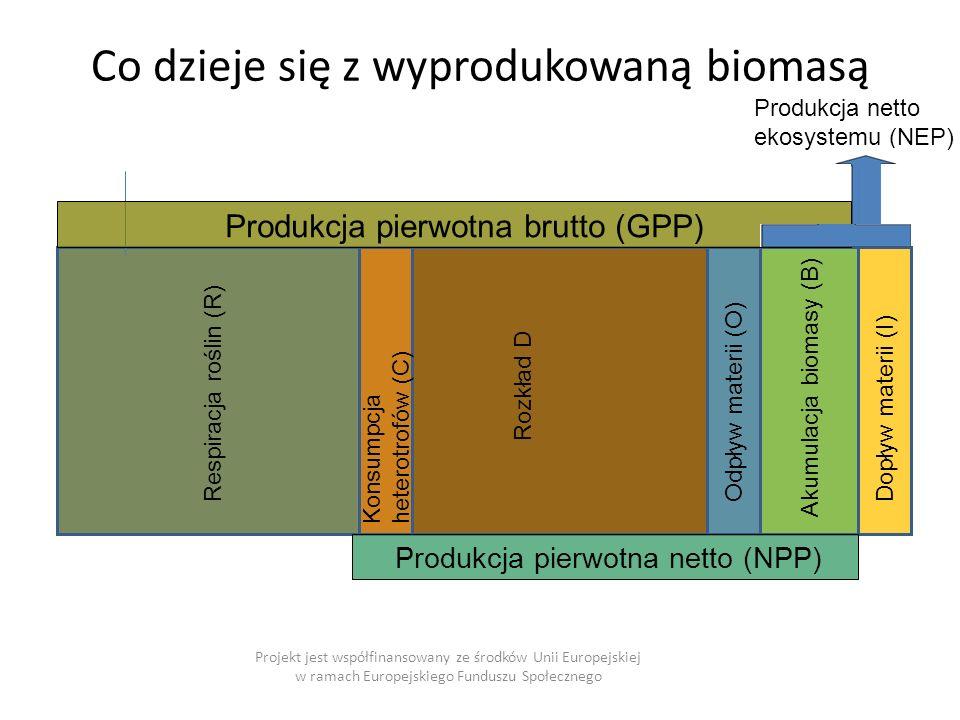 Co dzieje się z wyprodukowaną biomasą Projekt jest współfinansowany ze środków Unii Europejskiej w ramach Europejskiego Funduszu Społecznego Respiracja roślin (R) Konsumpcja heterotrofów (C) Rozkład D Odpływ materii (O)Dopływ materii (I) Akumulacja biomasy (B) Produkcja netto ekosystemu (NEP) Produkcja pierwotna brutto (GPP) Produkcja pierwotna netto (NPP)
