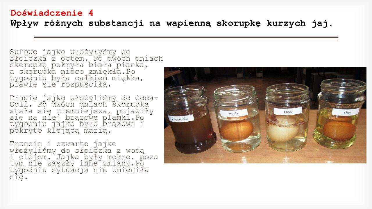 Doświadczenie 4 Wpływ różnych substancji na wapienną skorupkę kurzych jaj. Surowe jajko włożyłyśmy do słoiczka z octem. Po dwóch dniach skorupkę pokry
