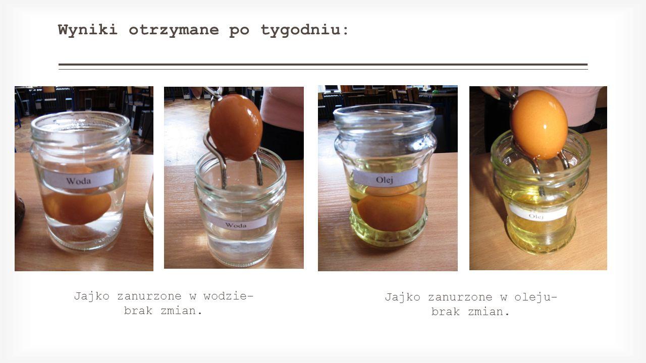 Wyniki otrzymane po tygodniu: Jajko zanurzone w wodzie- brak zmian. Jajko zanurzone w oleju- brak zmian.