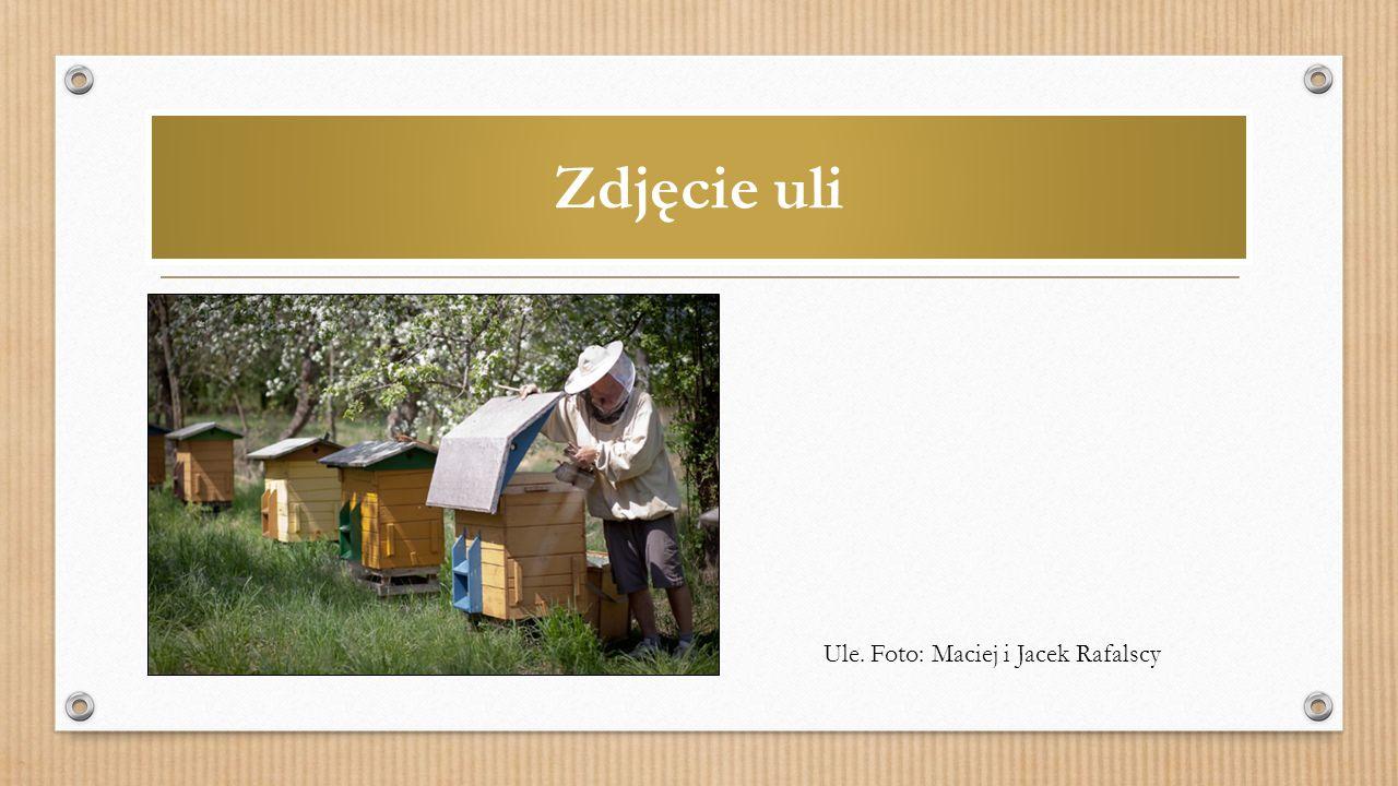 Zdjęcie uli Ule. Foto: Maciej i Jacek Rafalscy