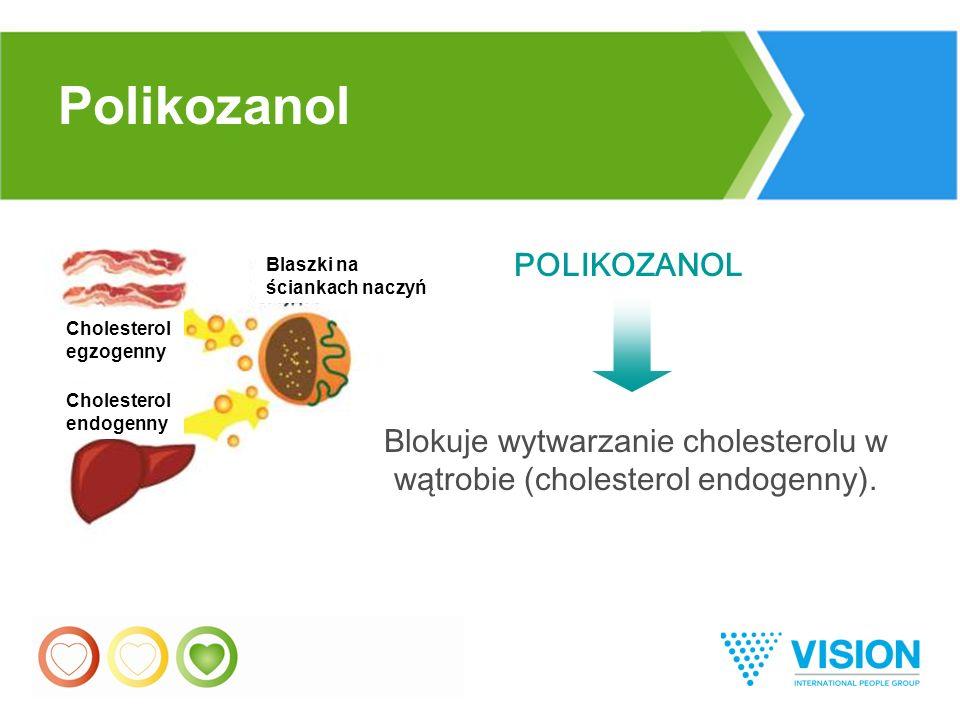 31 POLIKOZANOL Blokuje wytwarzanie cholesterolu w wątrobie (cholesterol endogenny).