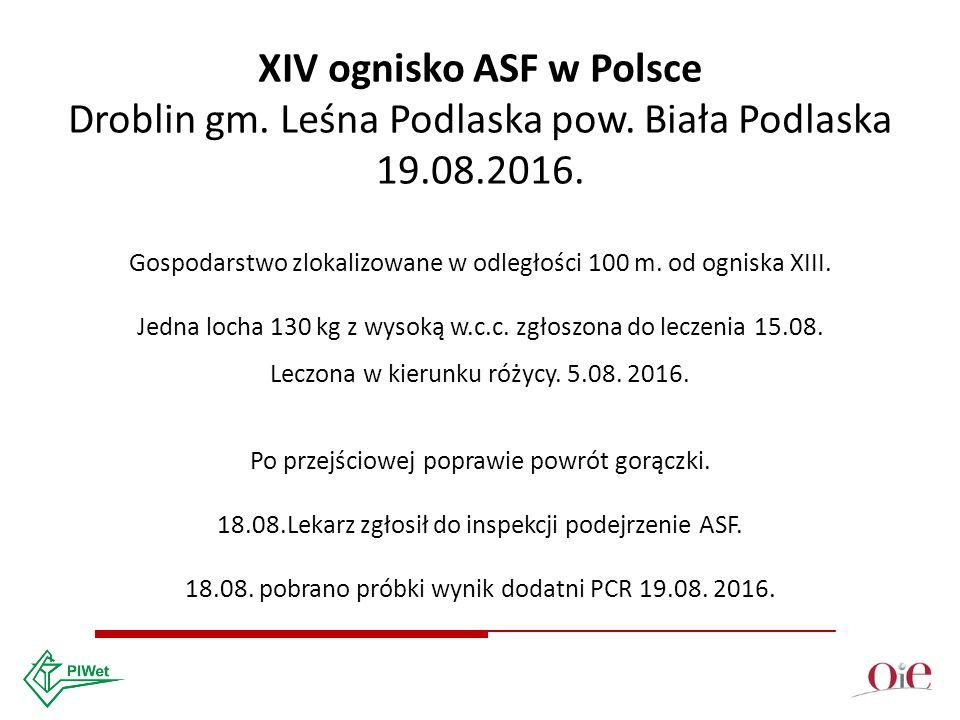 XIV ognisko ASF w Polsce Droblin gm. Leśna Podlaska pow.