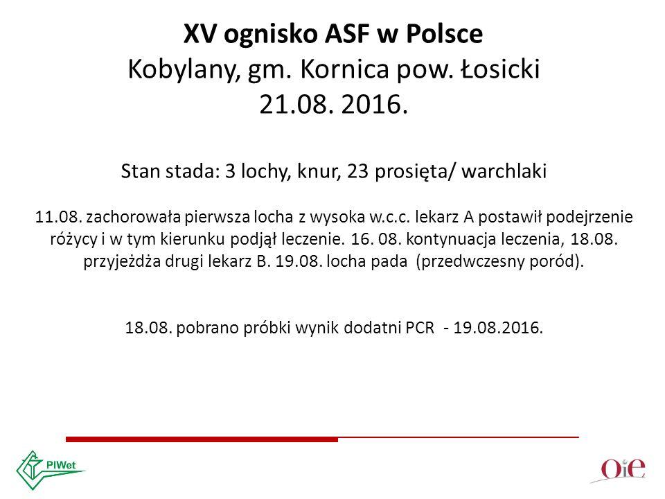 XV ognisko ASF w Polsce Kobylany, gm. Kornica pow.