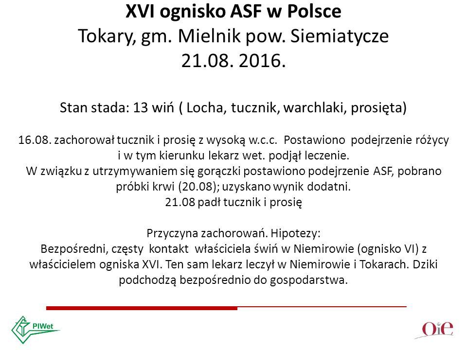 XVI ognisko ASF w Polsce Tokary, gm. Mielnik pow.