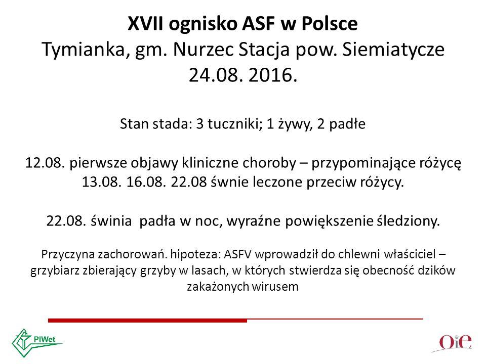 XVII ognisko ASF w Polsce Tymianka, gm. Nurzec Stacja pow.