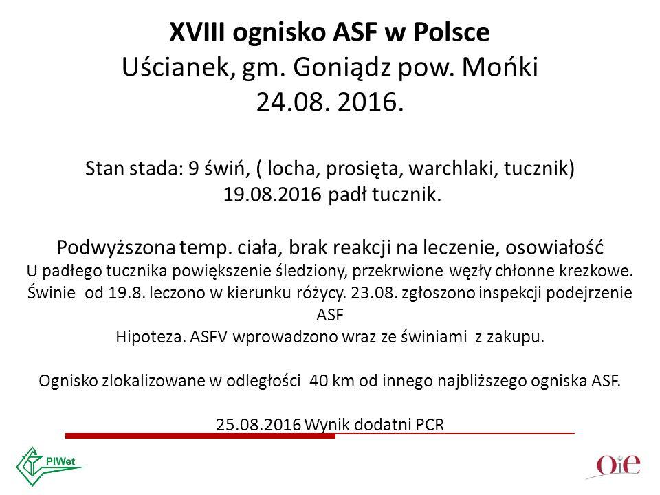 XVIII ognisko ASF w Polsce Uścianek, gm. Goniądz pow.