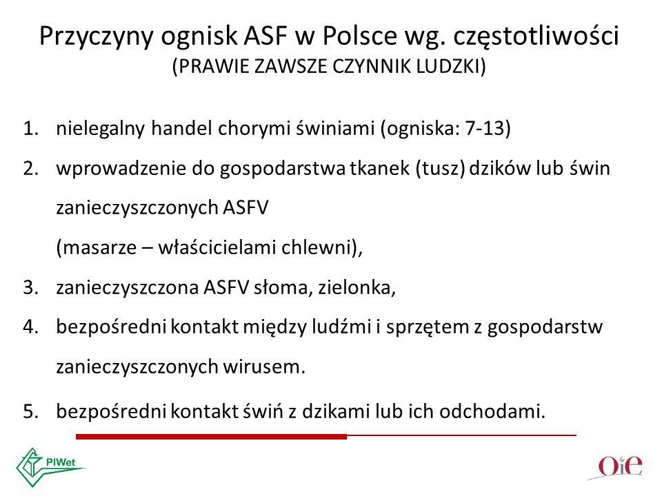Przyczyny ognisk ASF w Polsce wg.