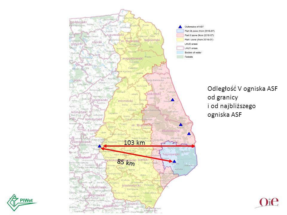 103 km 85 km Odległość V ogniska ASF od granicy i od najbliższego ogniska ASF