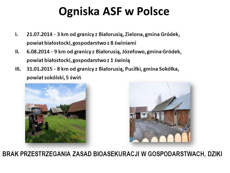 XII ognisko ASF w Polsce Augustowo ; Bielsk Podlaski Stado 20 tuczników plus 12 warchlaków zakupionych od nieznanego hodowcy w dn.