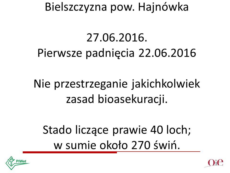 IV ognisko ASF w Polsce Bielszczyzna pow. Hajnówka 27.06.2016.
