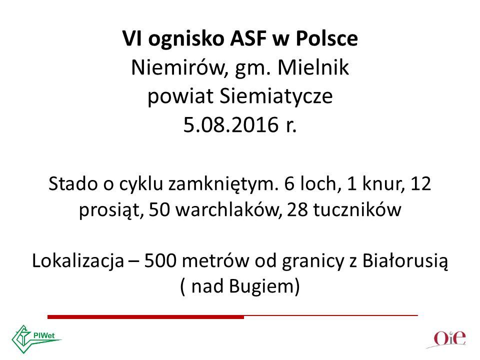 VI ognisko ASF w Polsce Niemirów, gm. Mielnik powiat Siemiatycze 5.08.2016 r.