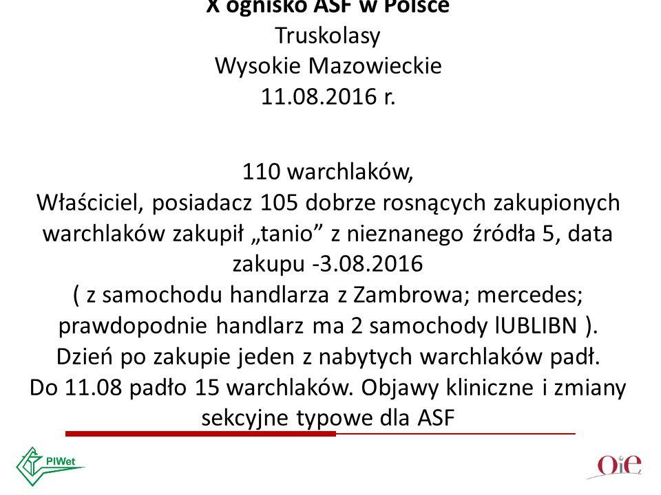 X ognisko ASF w Polsce Truskolasy Wysokie Mazowieckie 11.08.2016 r.