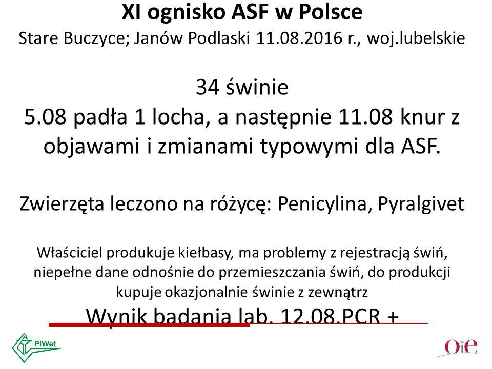 XI ognisko ASF w Polsce Stare Buczyce; Janów Podlaski 11.08.2016 r., woj.lubelskie 34 świnie 5.08 padła 1 locha, a następnie 11.08 knur z objawami i zmianami typowymi dla ASF.