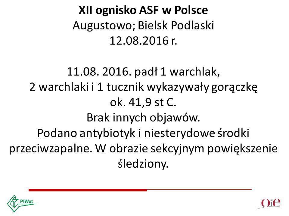 XII ognisko ASF w Polsce Augustowo; Bielsk Podlaski 12.08.2016 r.