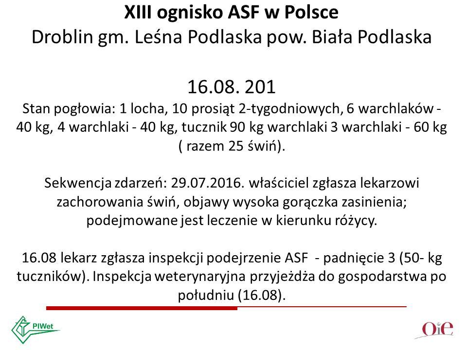 XIII ognisko ASF w Polsce Droblin gm. Leśna Podlaska pow.