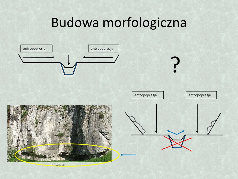 Budowa morfologiczna antropopresja Fot. Wiki CC