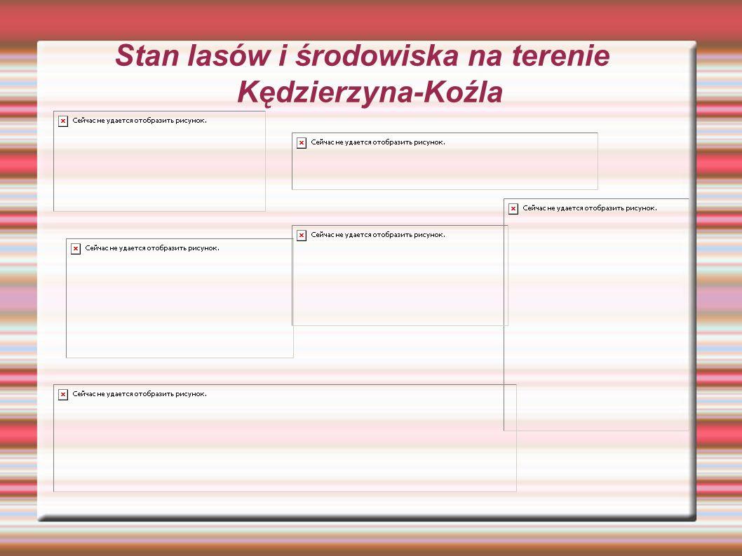 Stan lasów i środowiska na terenie Kędzierzyna-Koźla