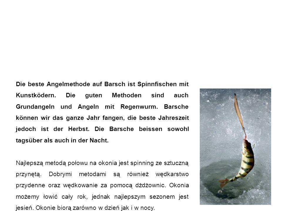 Barsch okoń Die beste Angelmethode auf Barsch ist Spinnfischen mit Kunstködern.