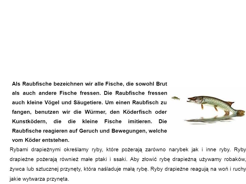 Raubfische ryby drapieżne Rybami drapieżnymi określamy ryby, które pożerają zarówno narybek jak i inne ryby.