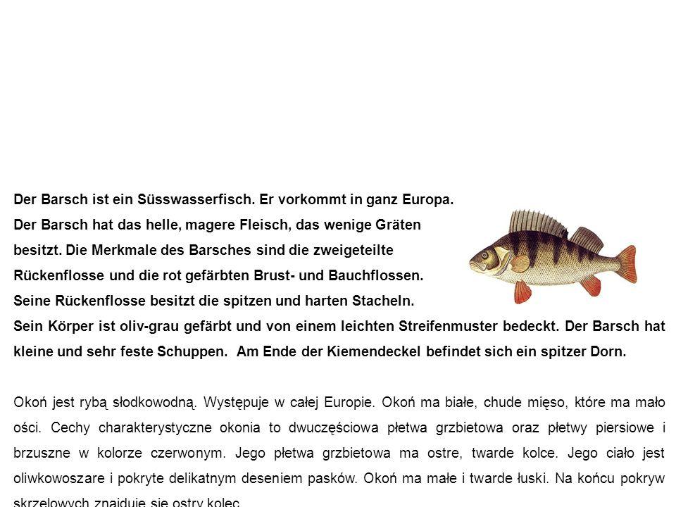 Barsch okoń Der Barsch ist ein Süsswasserfisch. Er vorkommt in ganz Europa.