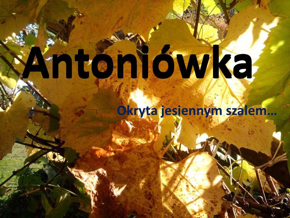 Antoniówka Okryta jesiennym szalem…