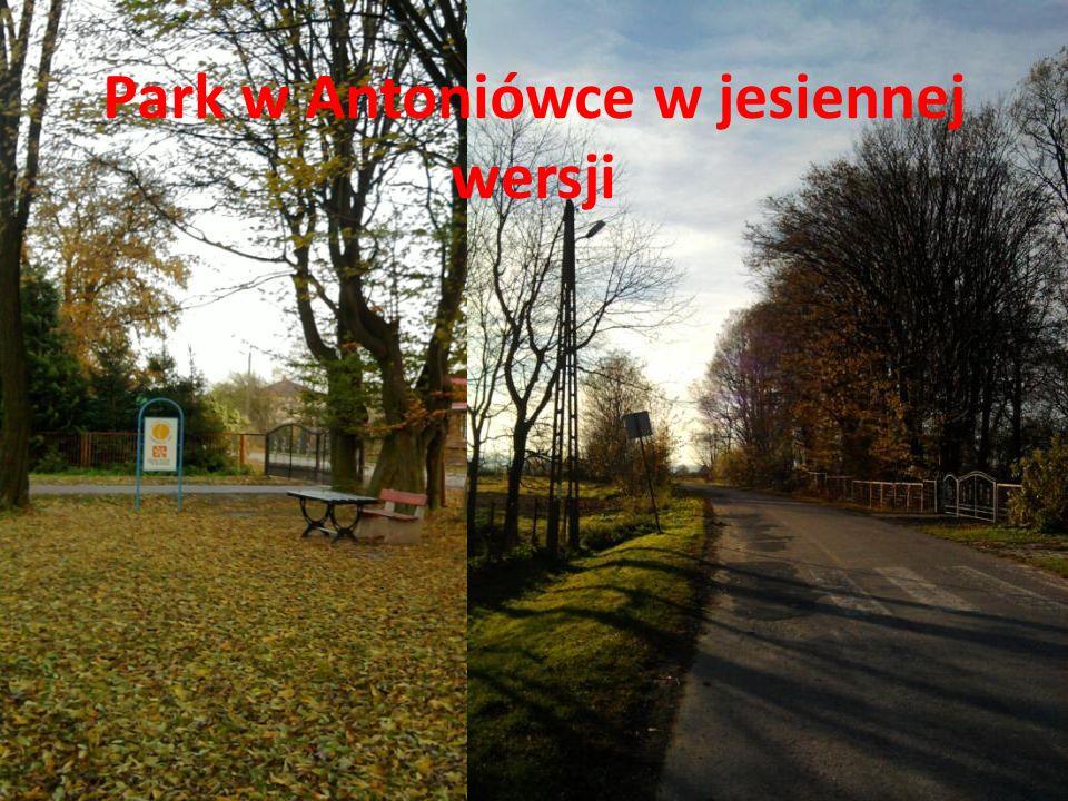 Park w Antoniówce w jesiennej wersji