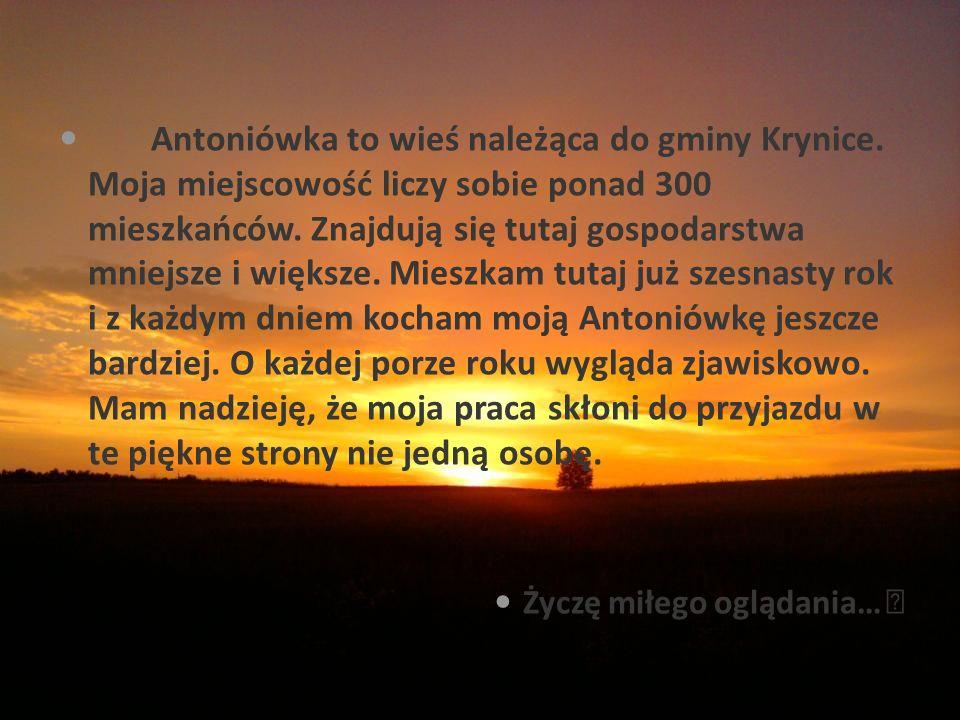 Antoniówka to wieś należąca do gminy Krynice. Moja miejscowość liczy sobie ponad 300 mieszkańców.