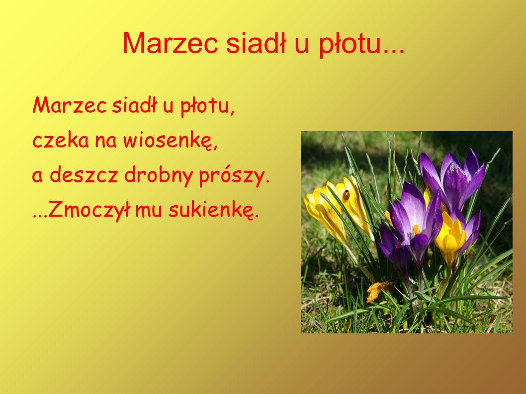 Na zielonej trawie pasie Kwiecień pawie, a jasne Słoneczko pomaga łaskawie.