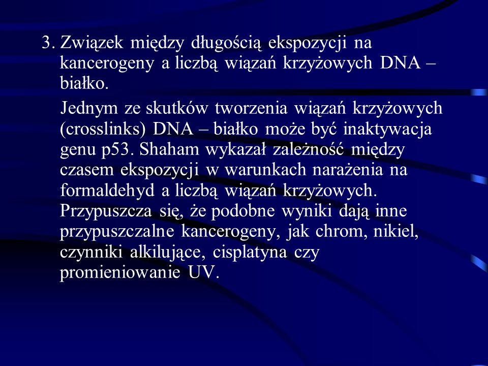 3. Związek między długością ekspozycji na kancerogeny a liczbą wiązań krzyżowych DNA – białko.