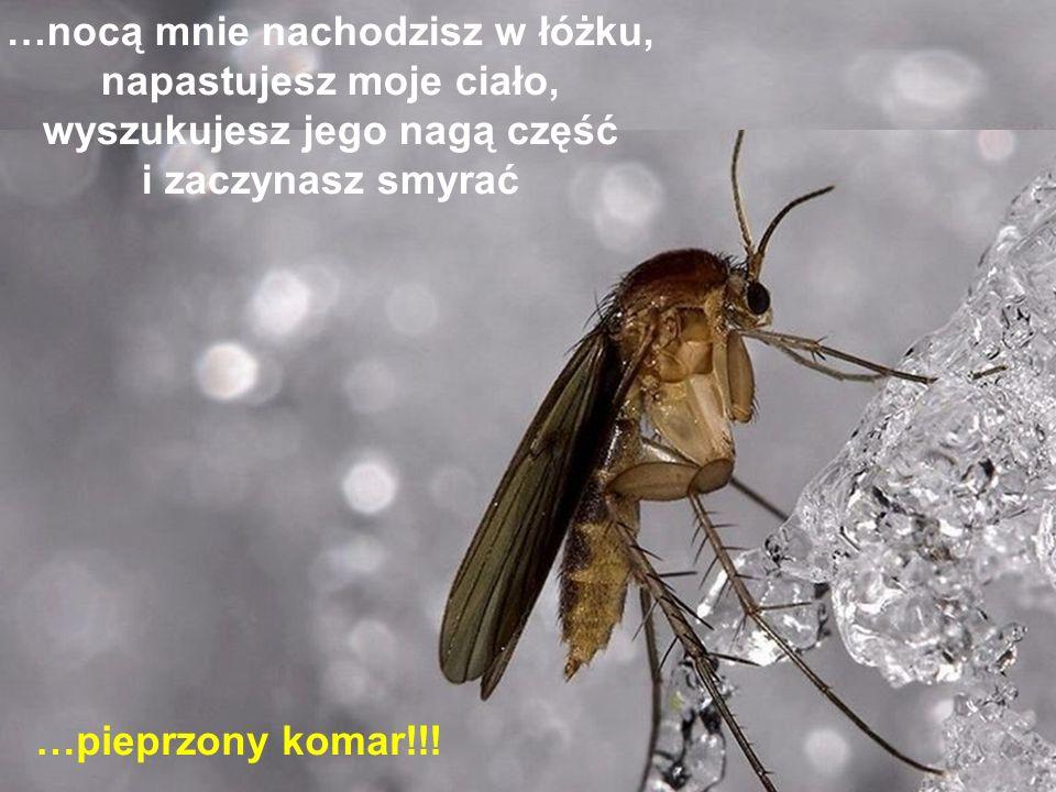 Jeżeli jesteś z kobietą, a ona ma rozpalone ciało, wilgotne usta, przymknięte oczy, drżący oddech … …to uciekaj, ona ma malarię!!!