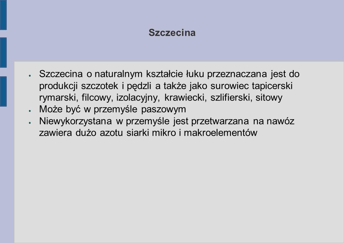Szczecina ● Szczecina o naturalnym kształcie łuku przeznaczana jest do produkcji szczotek i pędzli a także jako surowiec tapicerski rymarski, filcowy, izolacyjny, krawiecki, szlifierski, sitowy ● Może być w przemyśle paszowym ● Niewykorzystana w przemyśle jest przetwarzana na nawóz zawiera dużo azotu siarki mikro i makroelementów
