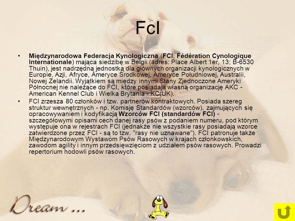 FcI Międzynarodowa Federacja Kynologiczna (FCI, Fédération Cynologique Internationale) mająca siedzibę w Belgii (adres: Place Albert 1er, 13; B-6530 Thuin), jest nadrzędną jednostką dla głównych organizacji kynologicznych w Europie, Azji, Afryce, Ameryce Środkowej, Ameryce Południowej, Australii, Nowej Zelandii.