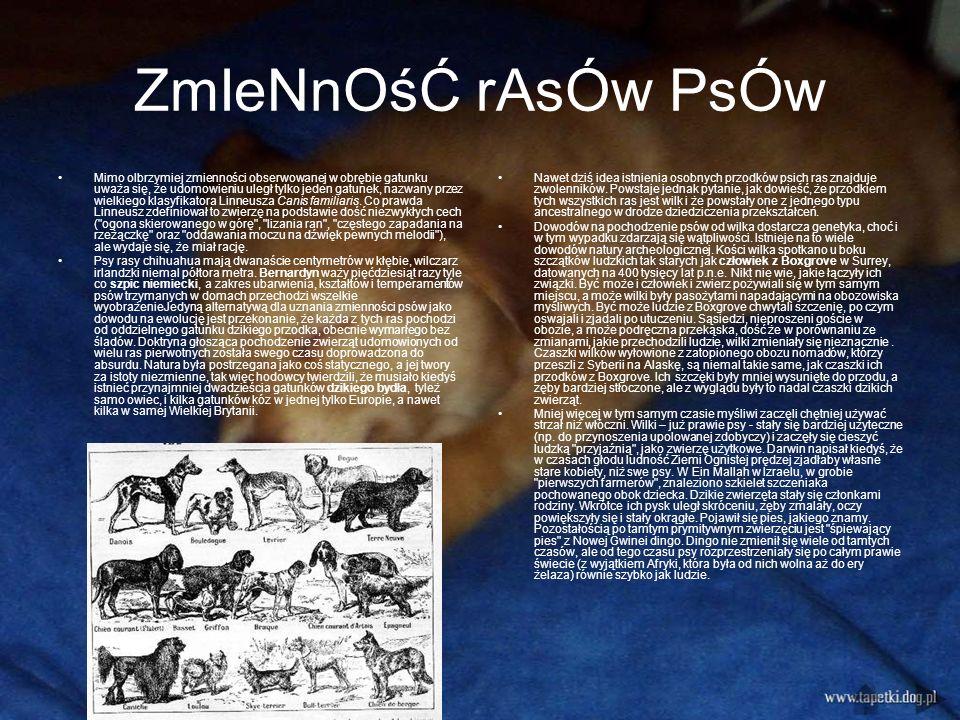 ZmIeNnOśĆ rAsÓw PsÓw Mimo olbrzymiej zmienności obserwowanej w obrębie gatunku uważa się, że udomowieniu uległ tylko jeden gatunek, nazwany przez wielkiego klasyfikatora Linneusza Canis familiaris.