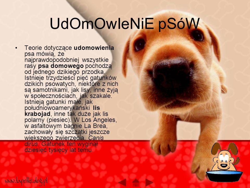 UdOmOwIeNiE pSóW Teorie dotyczące udomowienia psa mówią, że najprawdopodobniej wszystkie rasy psa domowego pochodzą od jednego dzikiego przodka.