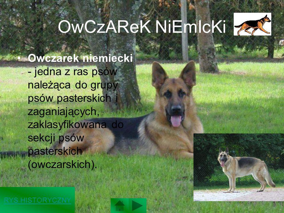 OwCzAReK NiEmIcKi Owczarek niemiecki - jedna z ras psów należąca do grupy psów pasterskich i zaganiających, zaklasyfikowana do sekcji psów pasterskich (owczarskich).