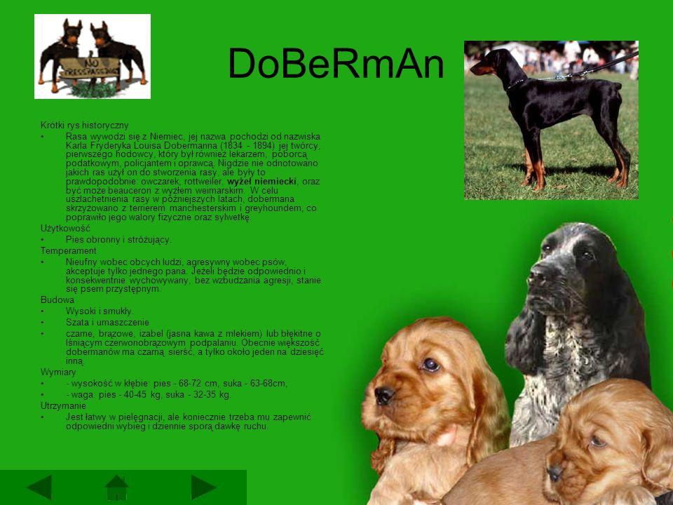 DoBeRmAn Krótki rys historyczny Rasa wywodzi się z Niemiec, jej nazwa pochodzi od nazwiska Karla Fryderyka Louisa Dobermanna (1834 - 1894) jej twórcy, pierwszego hodowcy, który był również lekarzem, poborcą podatkowym, policjantem i oprawcą.