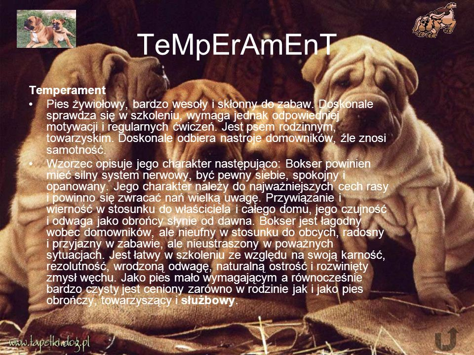 TeMpErAmEnT Temperament Pies żywiołowy, bardzo wesoły i skłonny do zabaw.