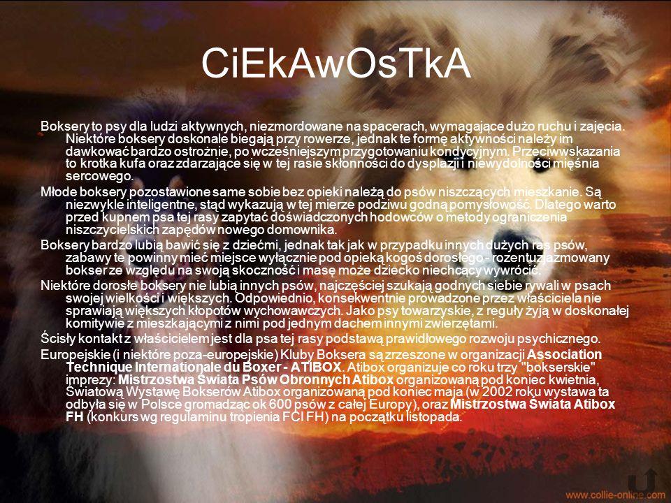 CiEkAwOsTkA Boksery to psy dla ludzi aktywnych, niezmordowane na spacerach, wymagające dużo ruchu i zajęcia.