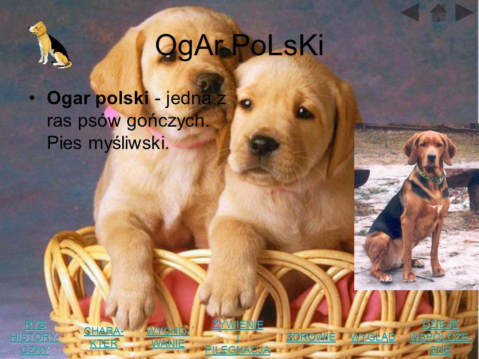 OgAr PoLsKi Ogar polski - jedna z ras psów gończych.