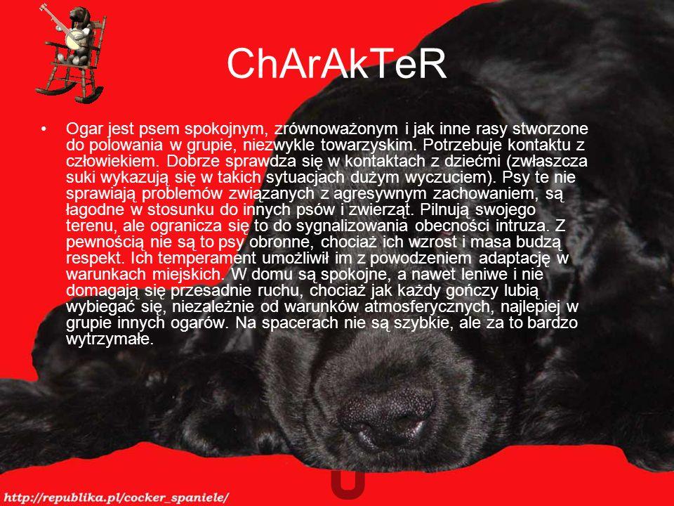 ChArAkTeR Ogar jest psem spokojnym, zrównoważonym i jak inne rasy stworzone do polowania w grupie, niezwykle towarzyskim.