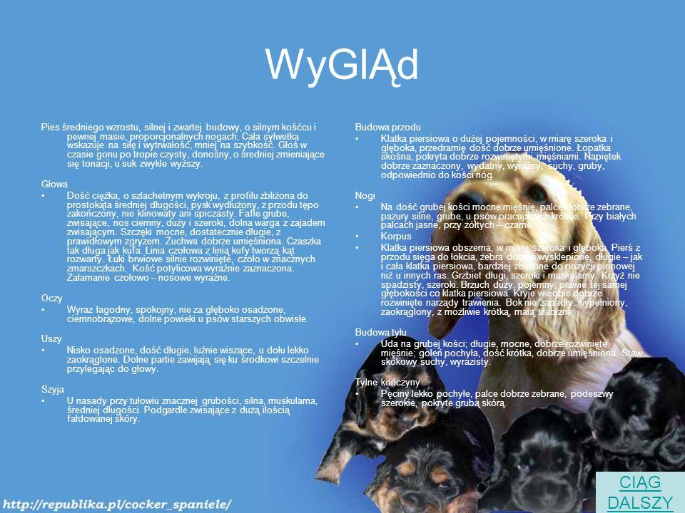 WyGlĄd Pies średniego wzrostu, silnej i zwartej budowy, o silnym kośćcu i pewnej masie, proporcjonalnych nogach.
