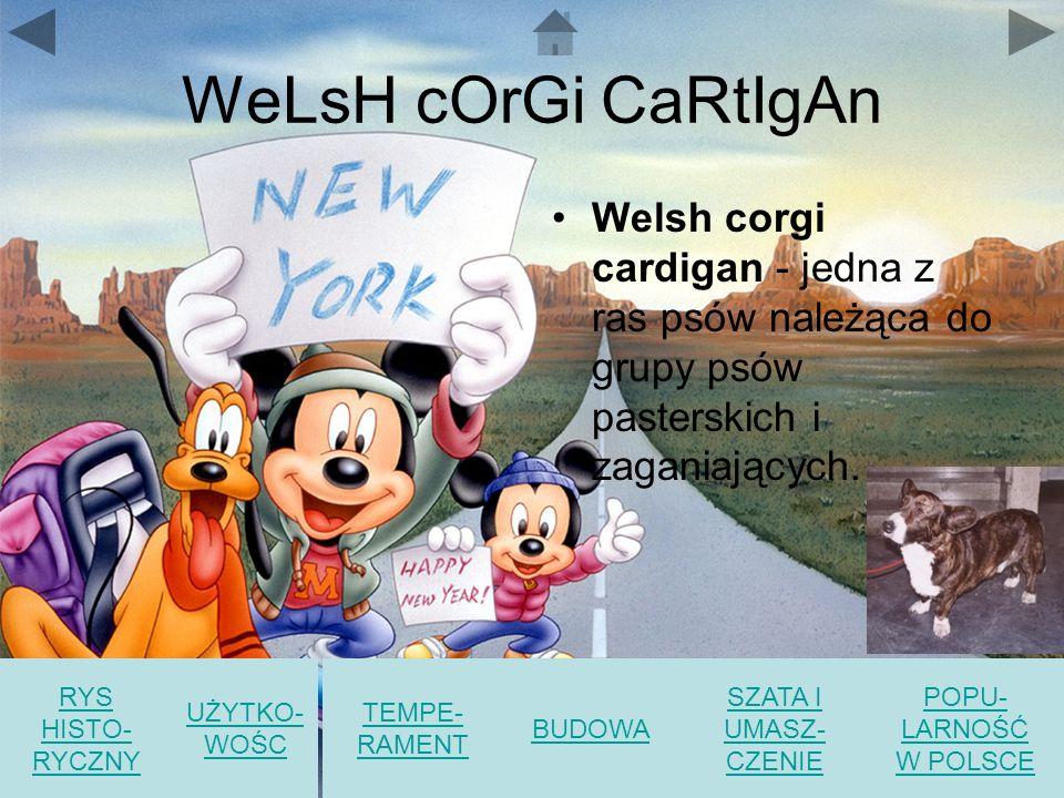WeLsH cOrGi CaRtIgAn Welsh corgi cardigan - jedna z ras psów należąca do grupy psów pasterskich i zaganiających.